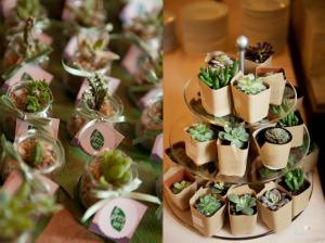 mini-plantas2