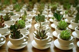 mini plantas3